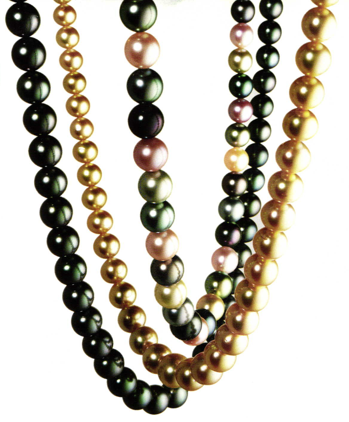 Schoeffel Is Among The Most Reble Companies Trading In Cultured Pearls World This Where A Tradition Of Successful Entrepreneurship